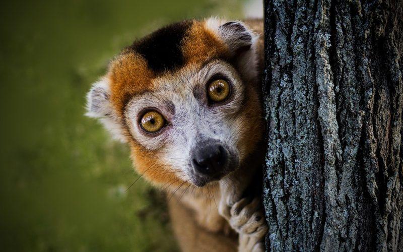 Co jste možná nevěděli o Madagaskaru