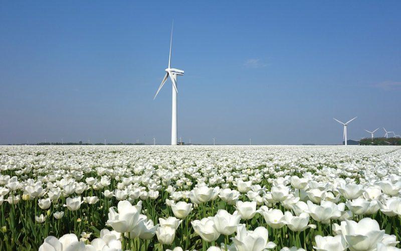 Tulipány, mlýny a sýrárny. Nejen to je Holandsko