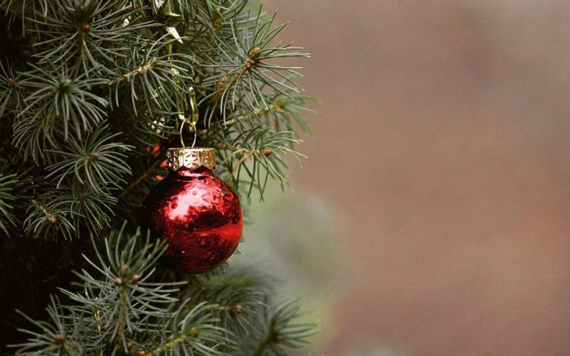 Co pořídit blízkému na Vánoce? Stavebnici, kterou ocení on i domácí mazlíček